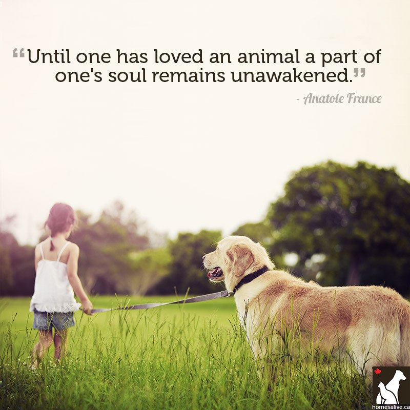 Quotes About Love From A Dog 60 Quotes Stunning Quotes About Dogs Love