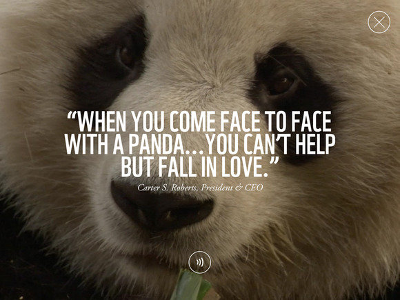 Quotes About Pandas | Quotes About Endangered Animals 30 Quotes