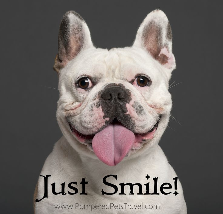 Quotes About Cute Dogs 26 Quotes