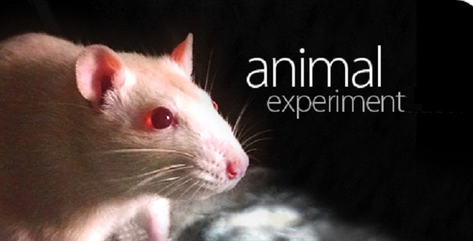 thesis against animal experimentation
