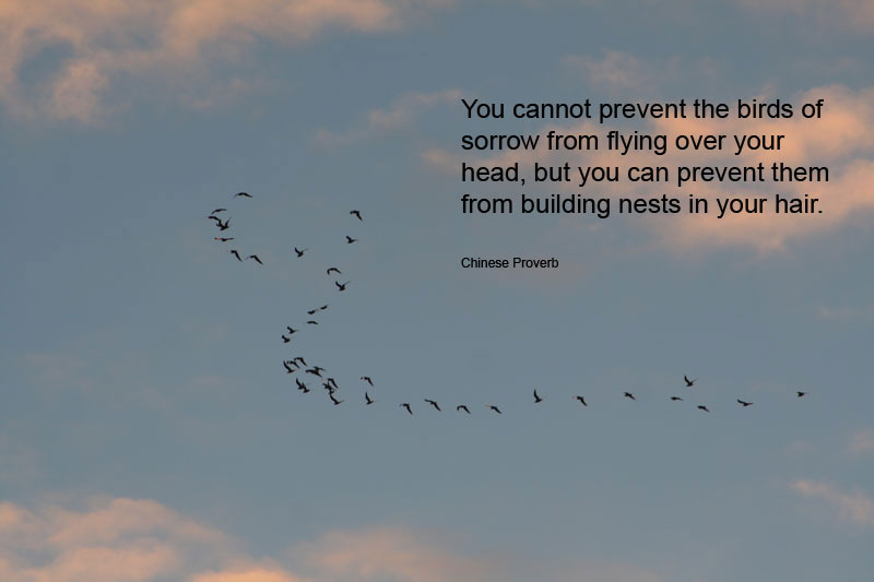 Quotes About Birds In Flight 60 Quotes Extraordinary Flight Quotes