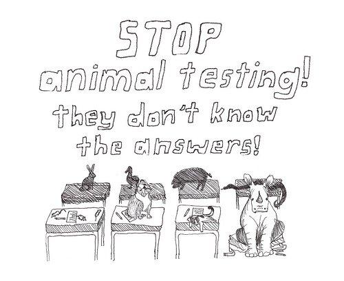 limit animal testing essay