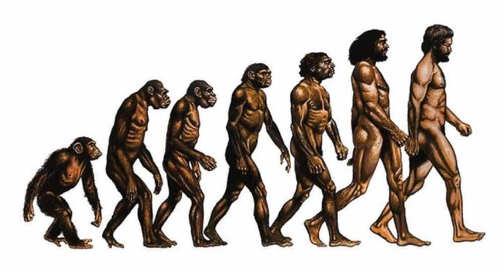 the theory of evolution as a reasonable theory on the existence of mankind