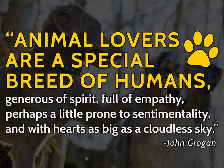 an animal lover