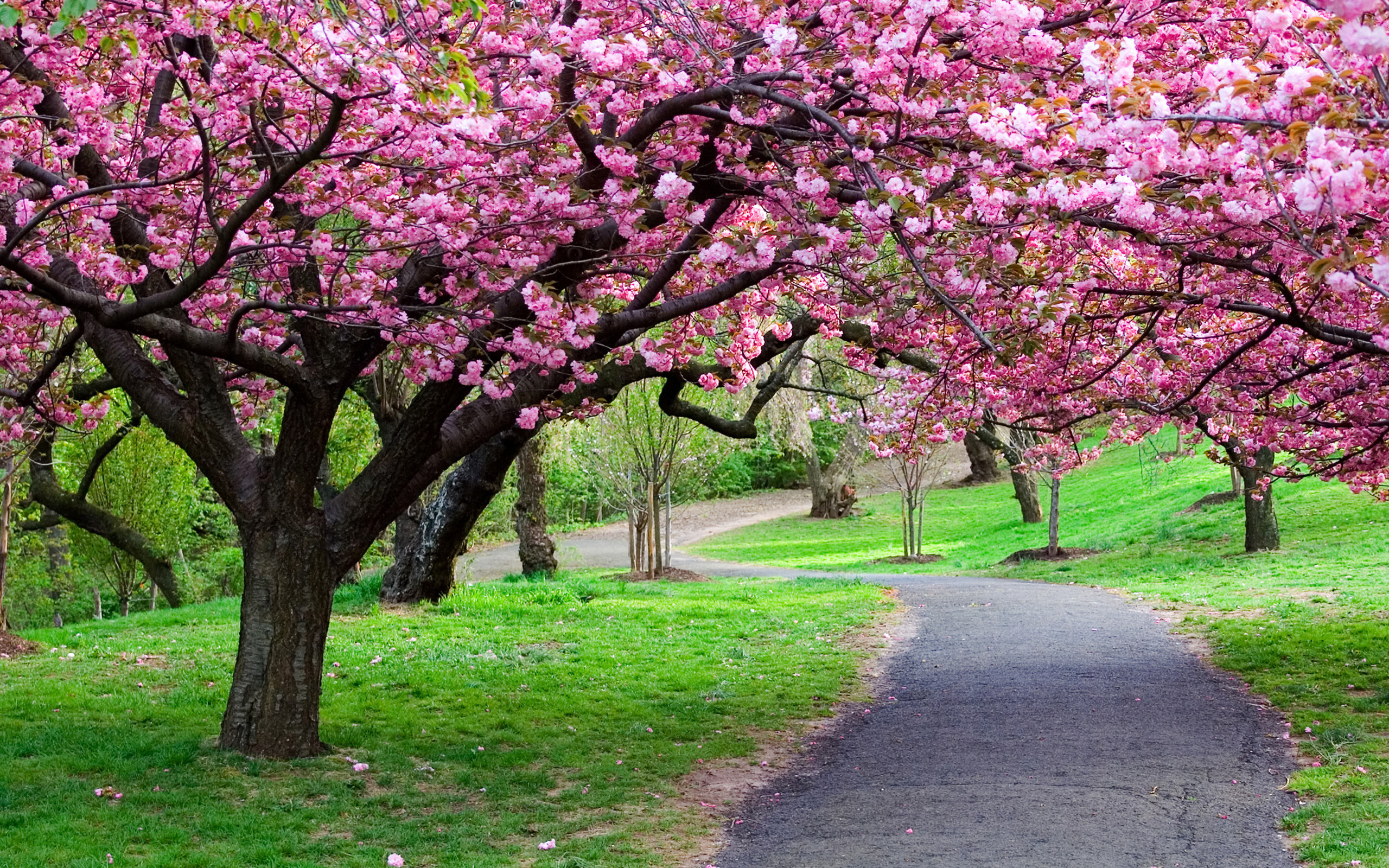 Quotes About Flowering Trees 33 Quotes