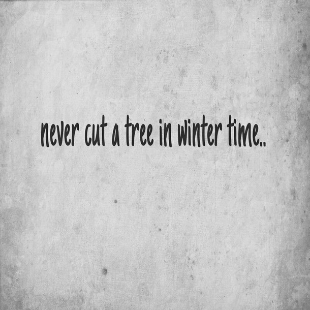 Quotes About Harming Trees 24 Quotes