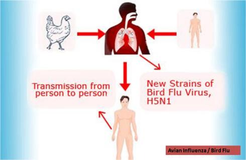 bird flu causes symptoms and treatment