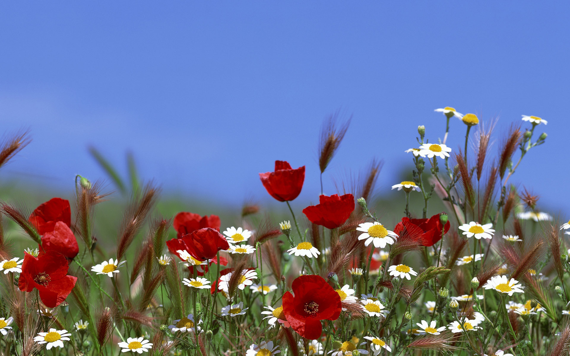 Quotes about field of flowers 59 quotes izmirmasajfo