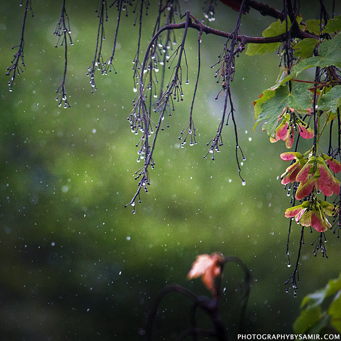 rain wallpaper with quotes in malayalam - photo #28