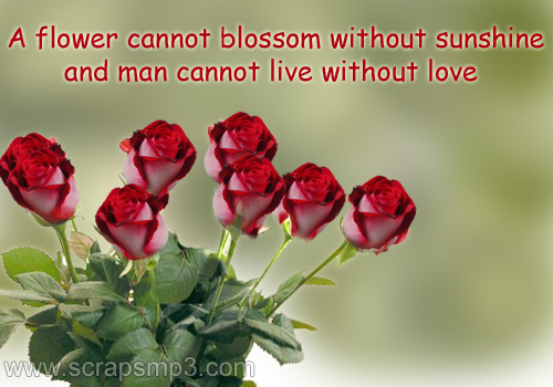 Quotes About Beauty Of Flowers 62