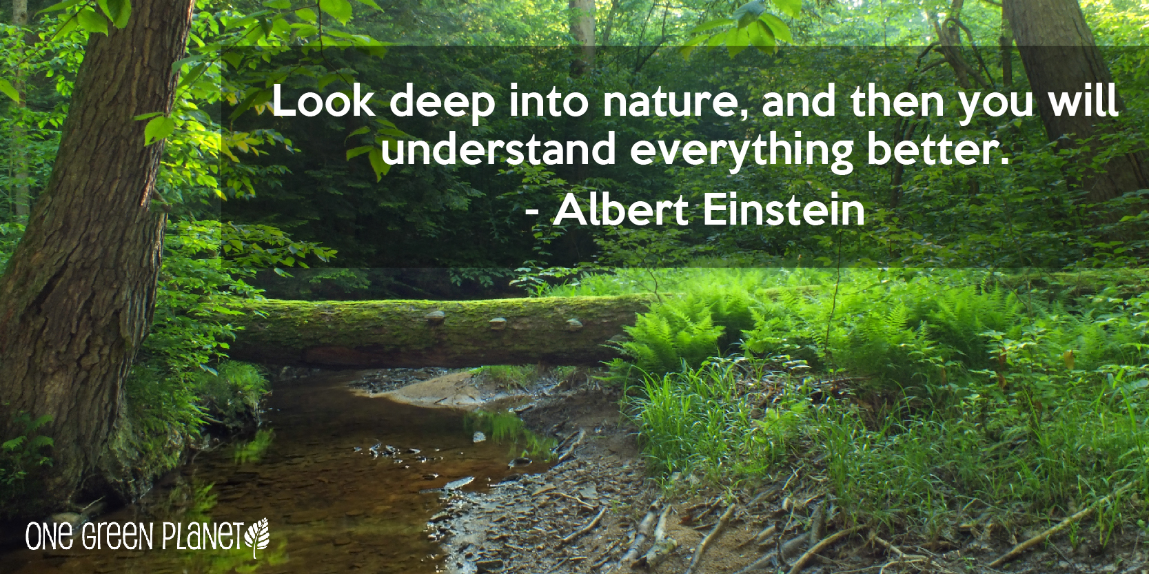 Quotes About Protection Of Environment 24 Quotes