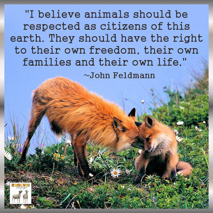 a comparison on the lives of animals and human beings known as speciesism