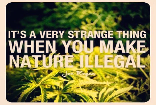 modern liberalism and marijuana legalization essay