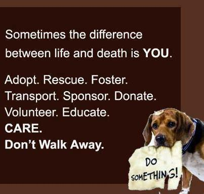 Quotes About Animal Shelter 32 Quotes