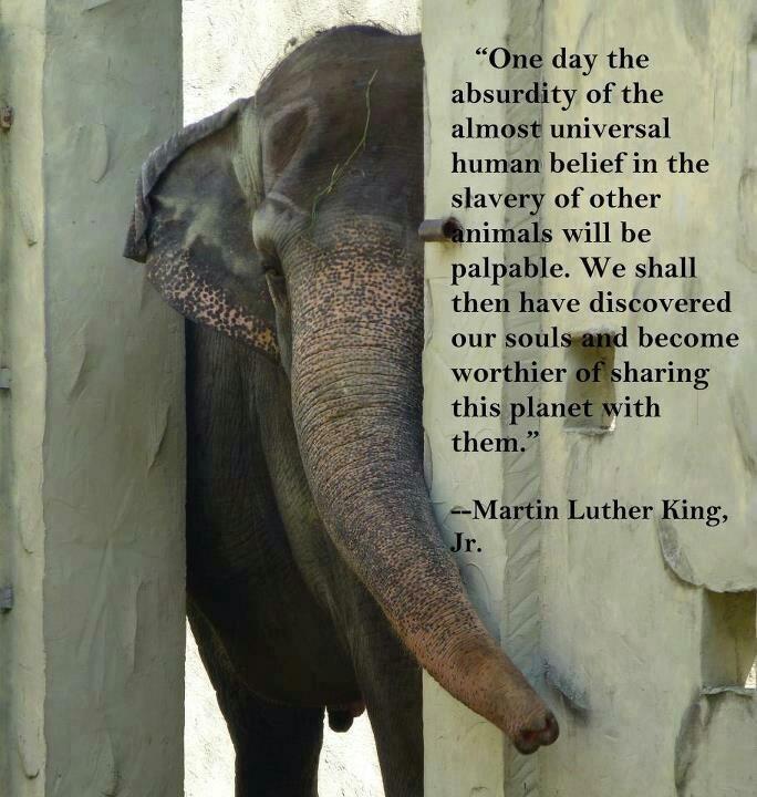 essays on animals rights
