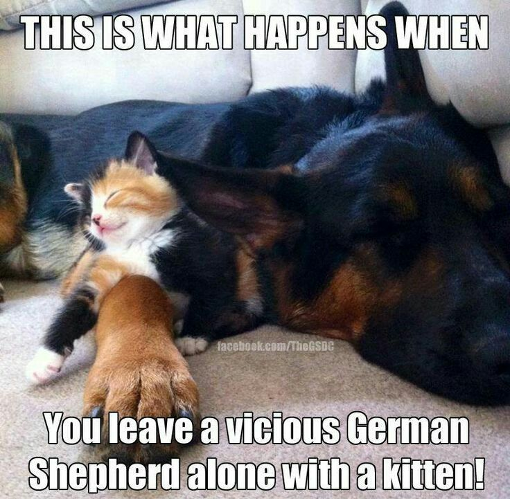 Quotes About German Shepherds 42 Quotes