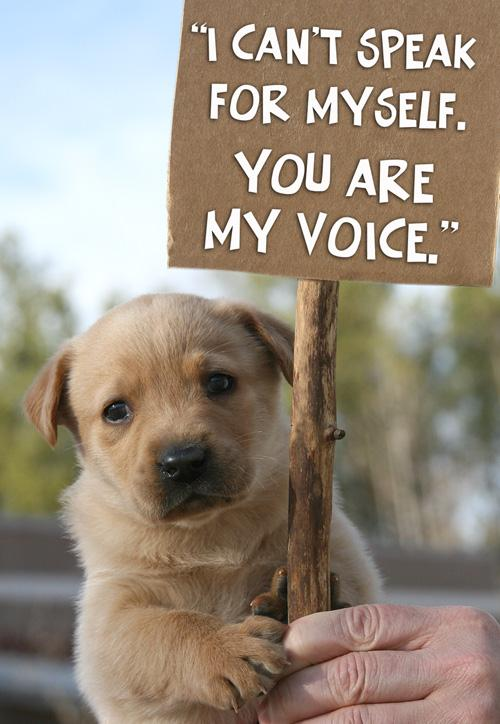 Quotes About Animal Welfare 71 Quotes