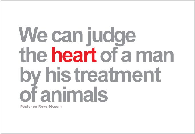 Quotes About Animal Treatment 35 Quotes