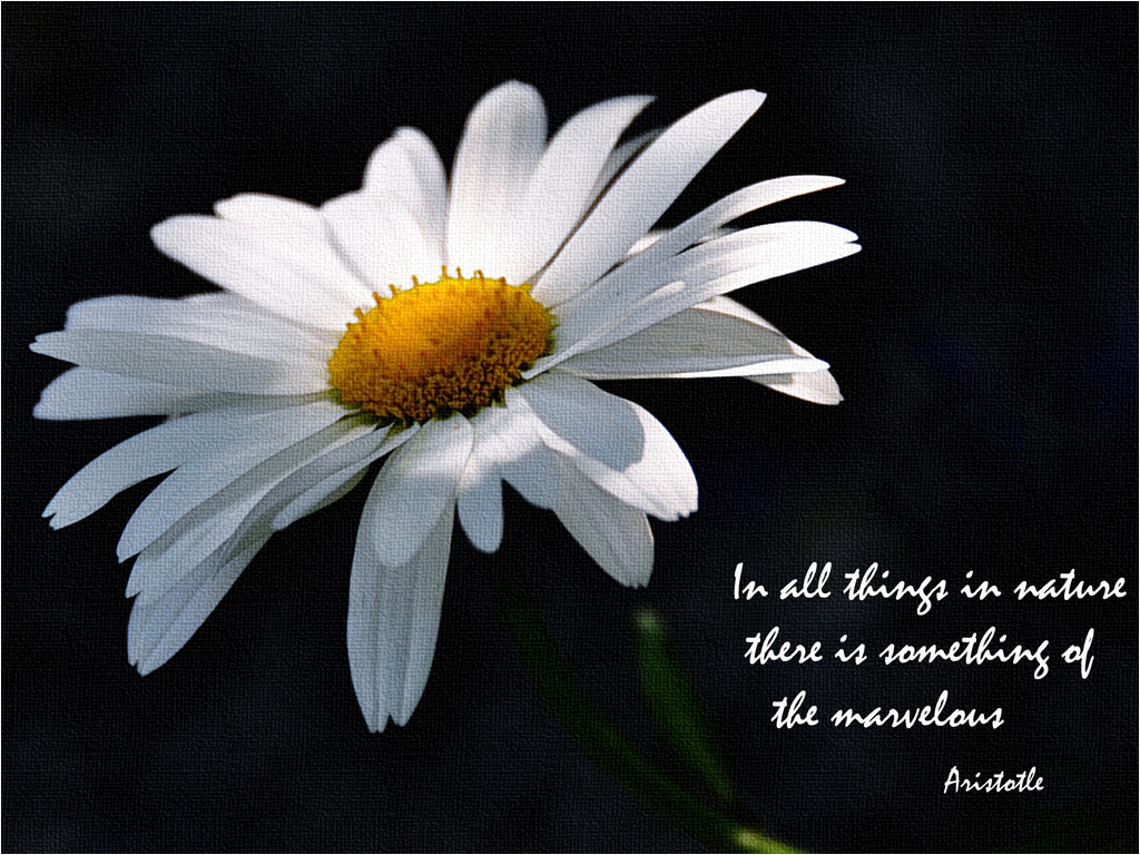 Quotes About Daisy 98 Quotes