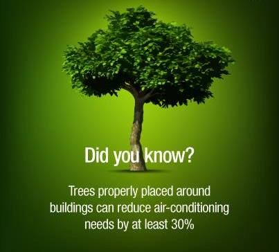 Essay on Benefits of Planting Trees for Children and