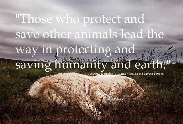 Quotes About Animal Protection 29 Quotes