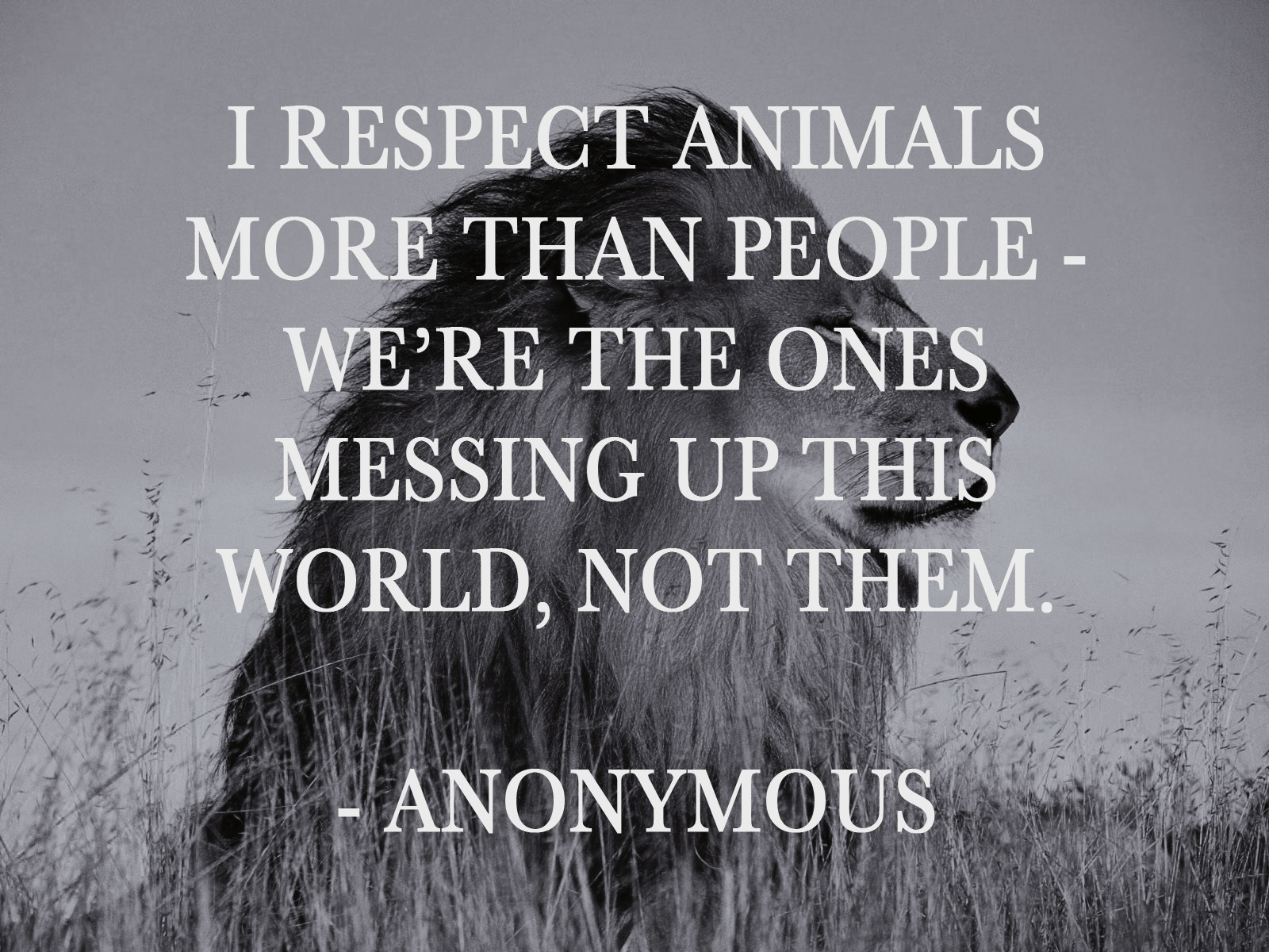 Animal Rights Quotes Quotes About Animal Rights 128 Quotes