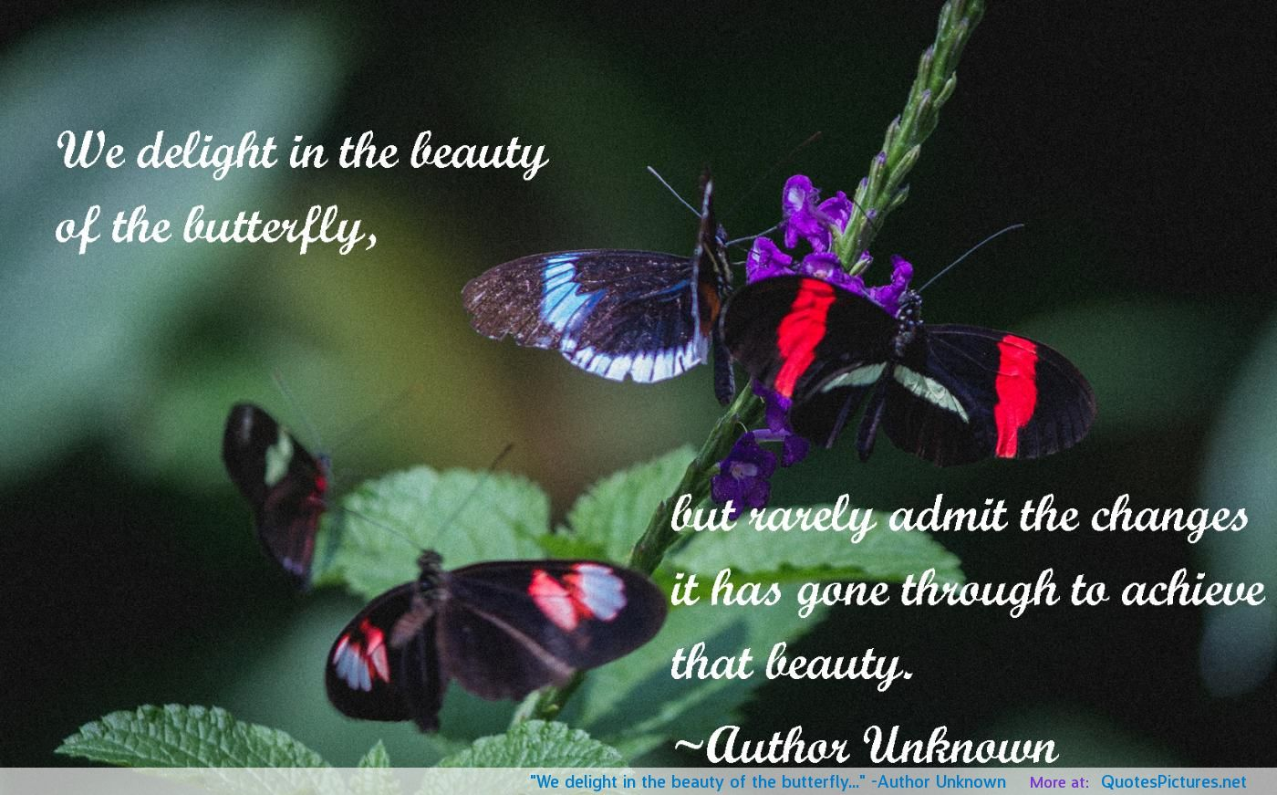 Quotes About Beauty Unknown 32 Quotes
