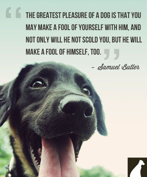 Quotes About Your Pet Dog 21 Quotes