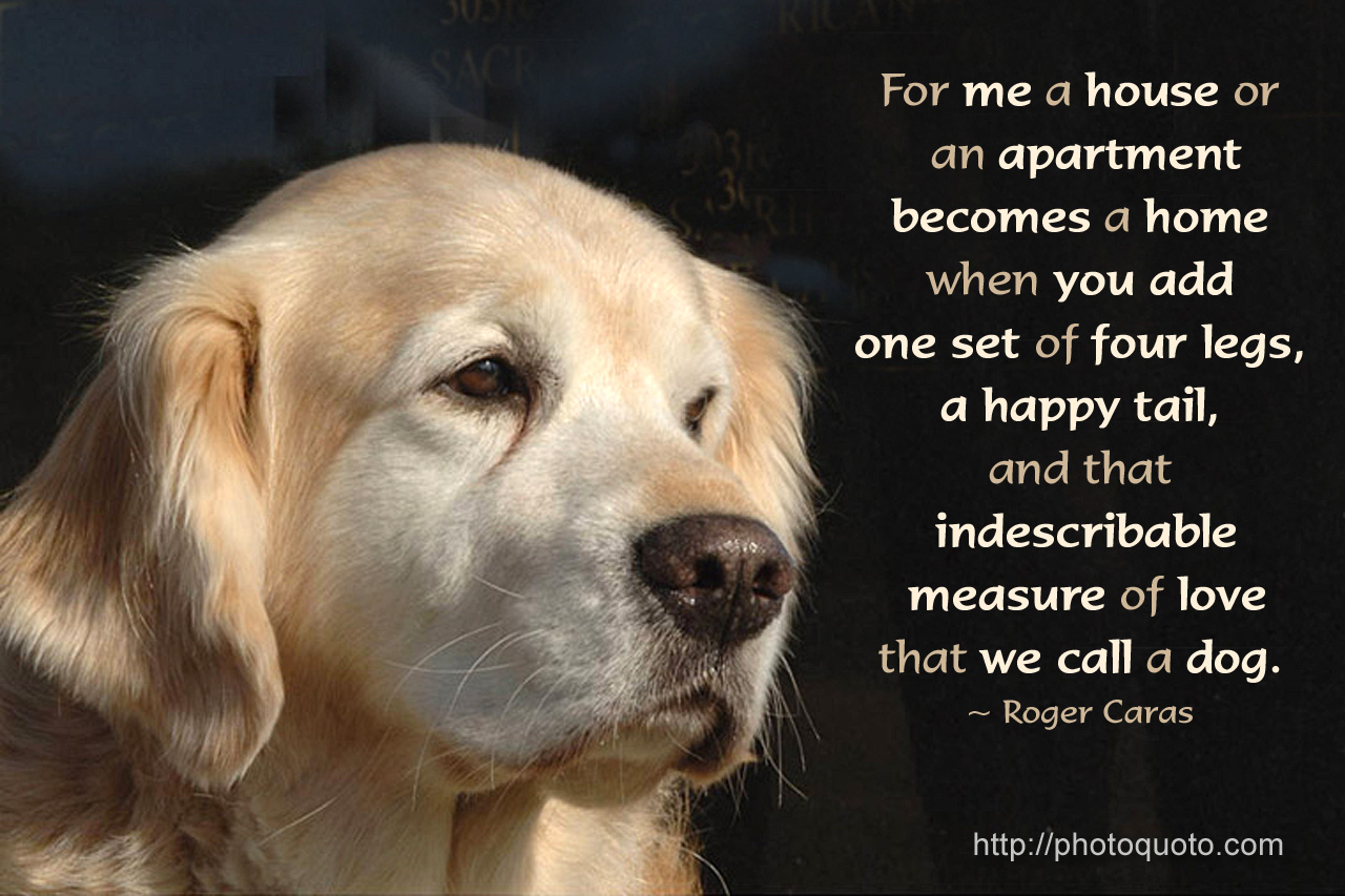 Famous Quotes About Animal Lovers Www Topsimages Com