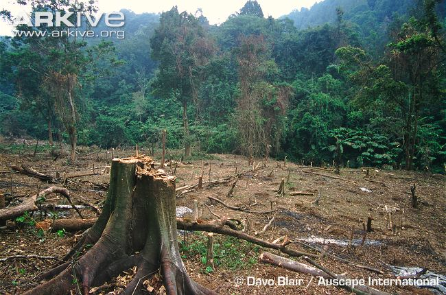 a discussion on the destruction of rainforests