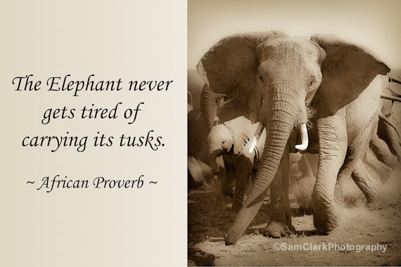 Elephant Good Luck Quote: Quotes About Elephant (275 Quotes