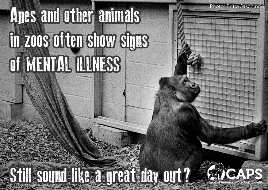 Quotes About Zoos 60 Quotes
