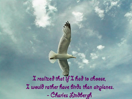 Quotes About Bird Phoenix 60 Quotes Inspiration Quotes About Birds