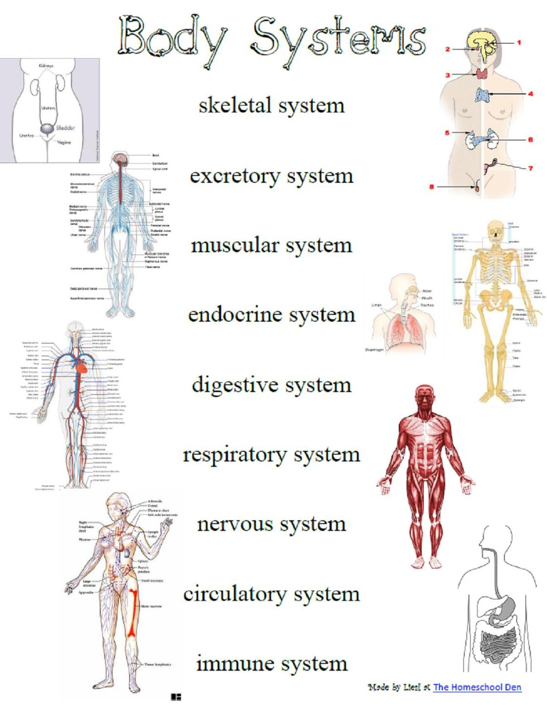 Quotes About Body Systems 60 Quotes