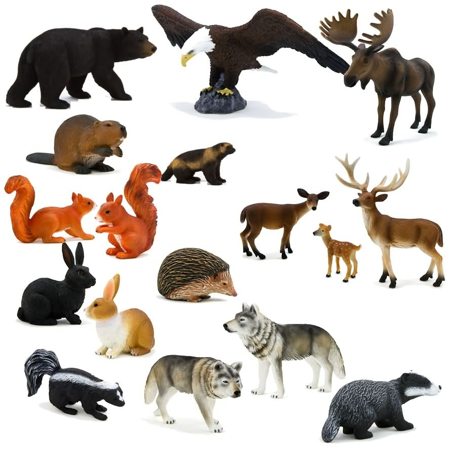 Quotes About Forest Animals 56 Quotes