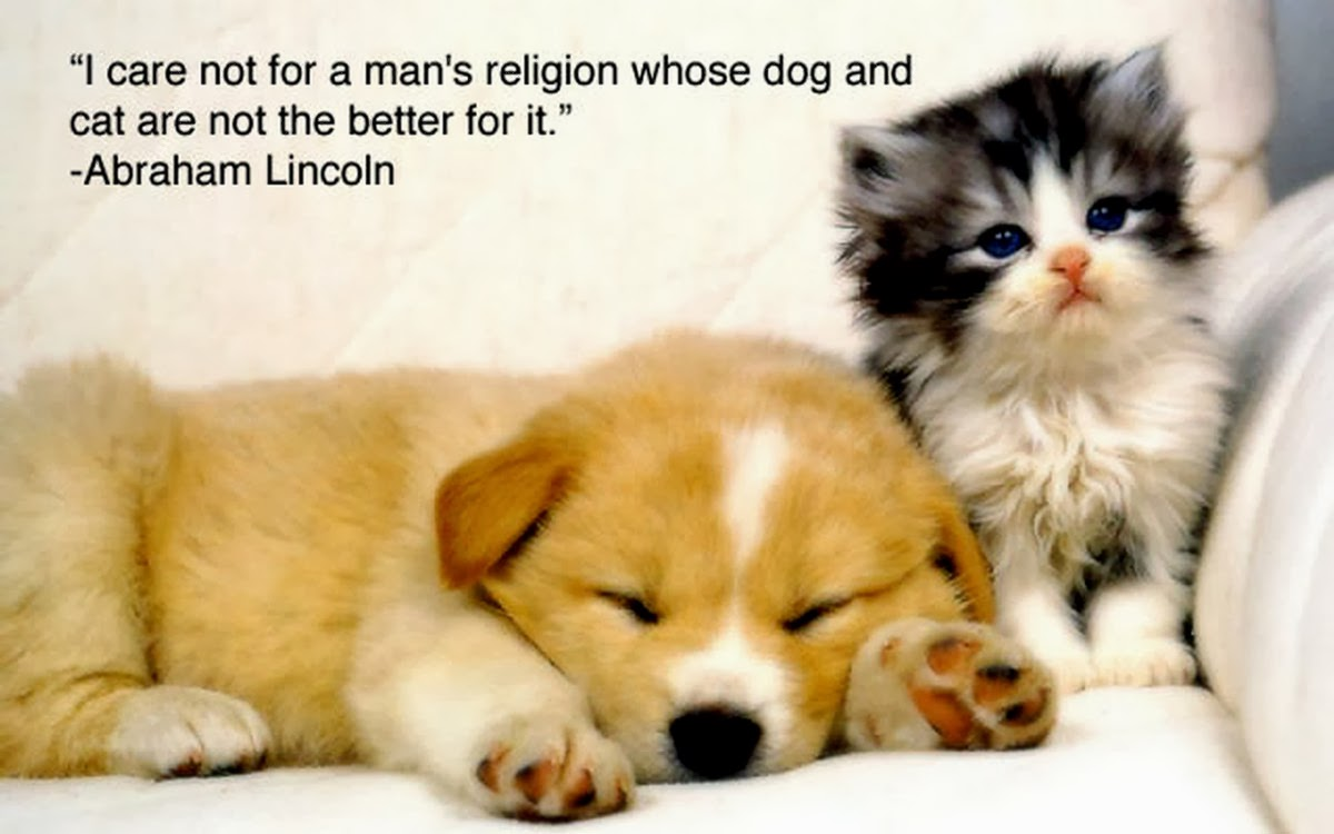 Quotes About An Animal S Love 65 Quotes