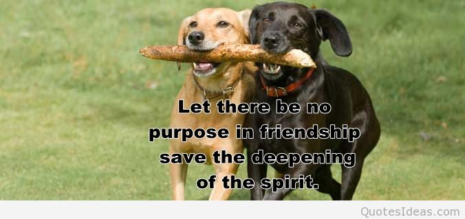 animal friendship quotes