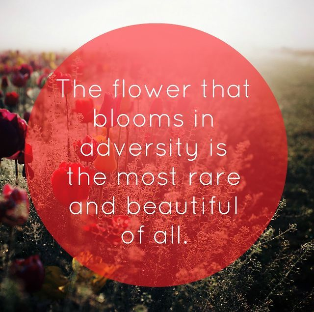 Quotes about rare flowers 48 quotes the flower that blooms in z mightylinksfo