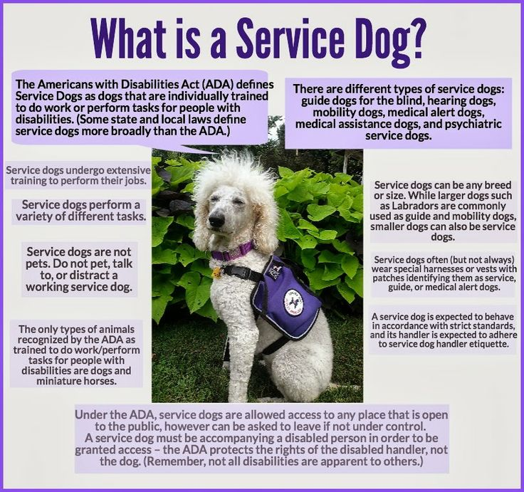 Quotes About Assistance Dogs 22 Quotes