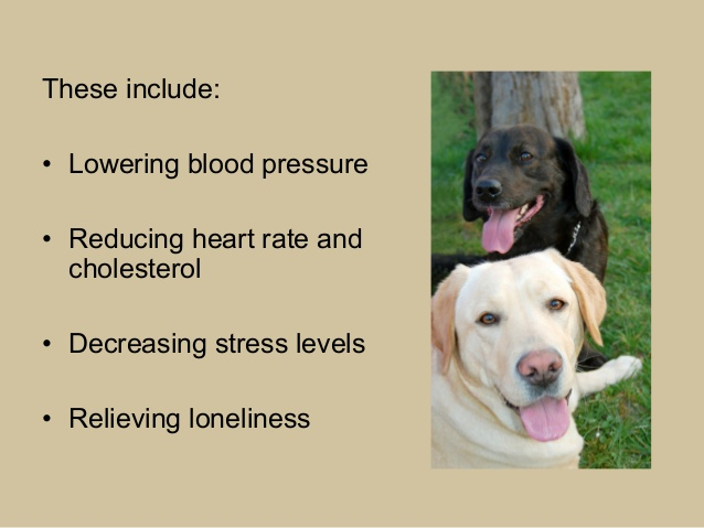 Dog Quotes Therapy Www Picswe Com