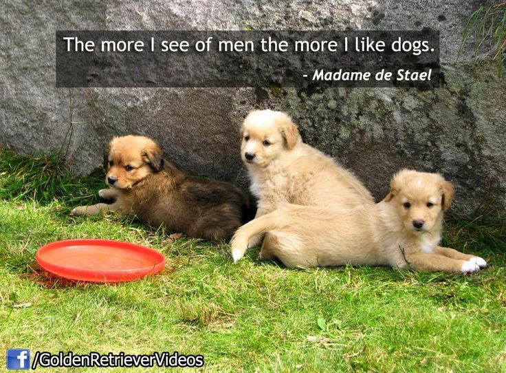 Quotes About Golden Retrievers 78 Quotes