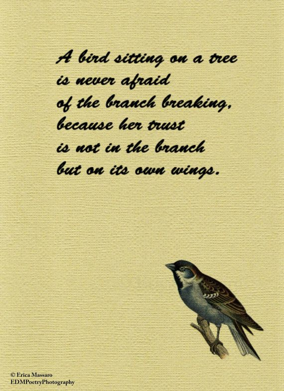 Quotes About Bird Love 60 Quotes Amazing Quotes About Birds