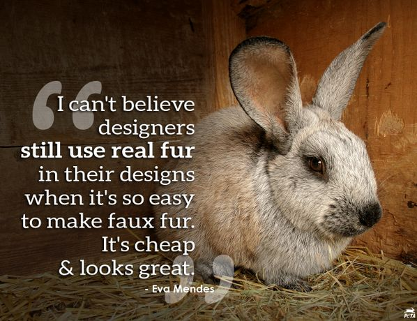 short essays on cruelty to animals Animal cruelty- persuasive essay every day in the australia animals are beaten, neglected, or forced to struggle for survival left in unsanitary conditions with no food or water, they have little hope as they live out their days without the compassion they deserve.