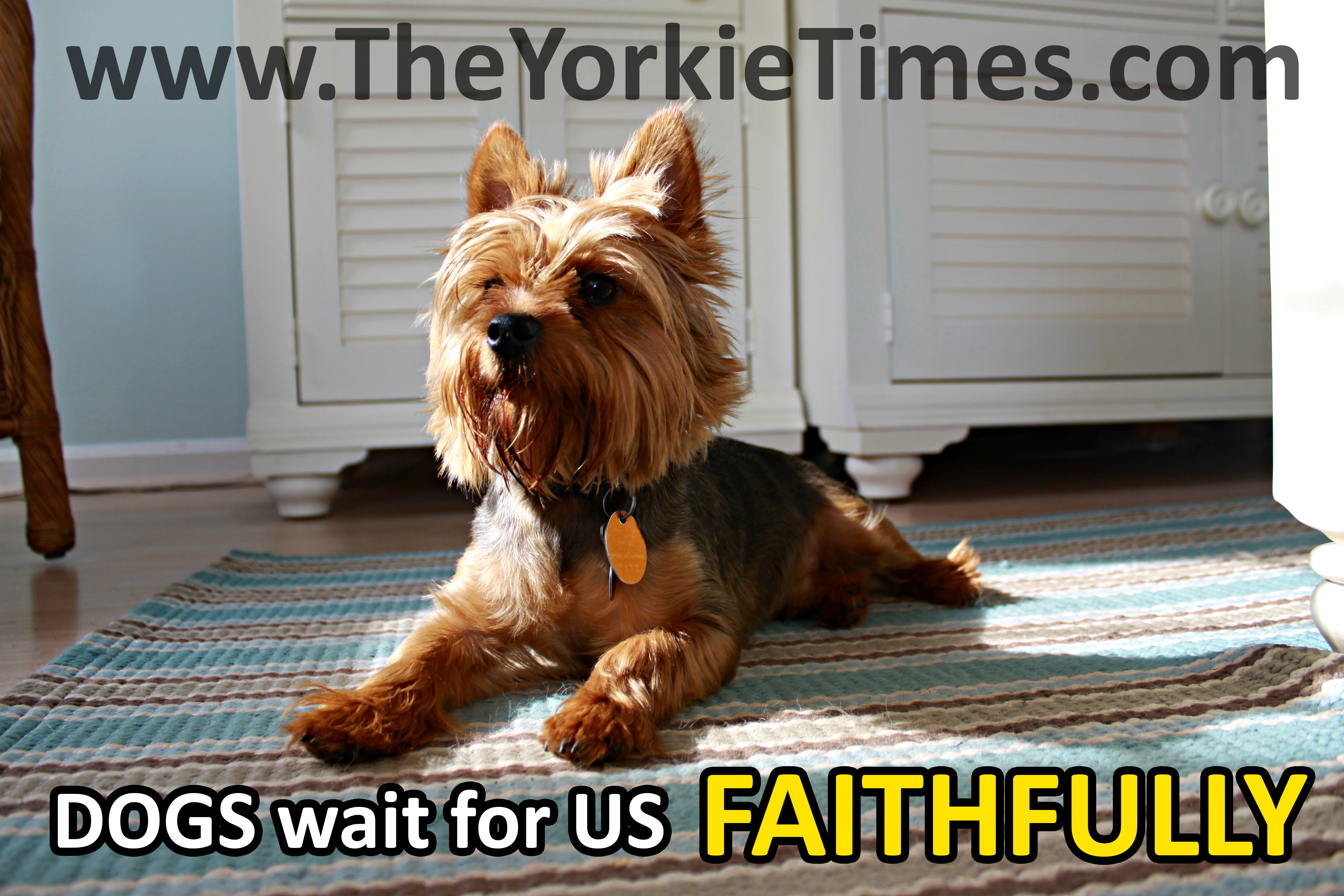 Yorkie Quotes Love Www Topsimages Com