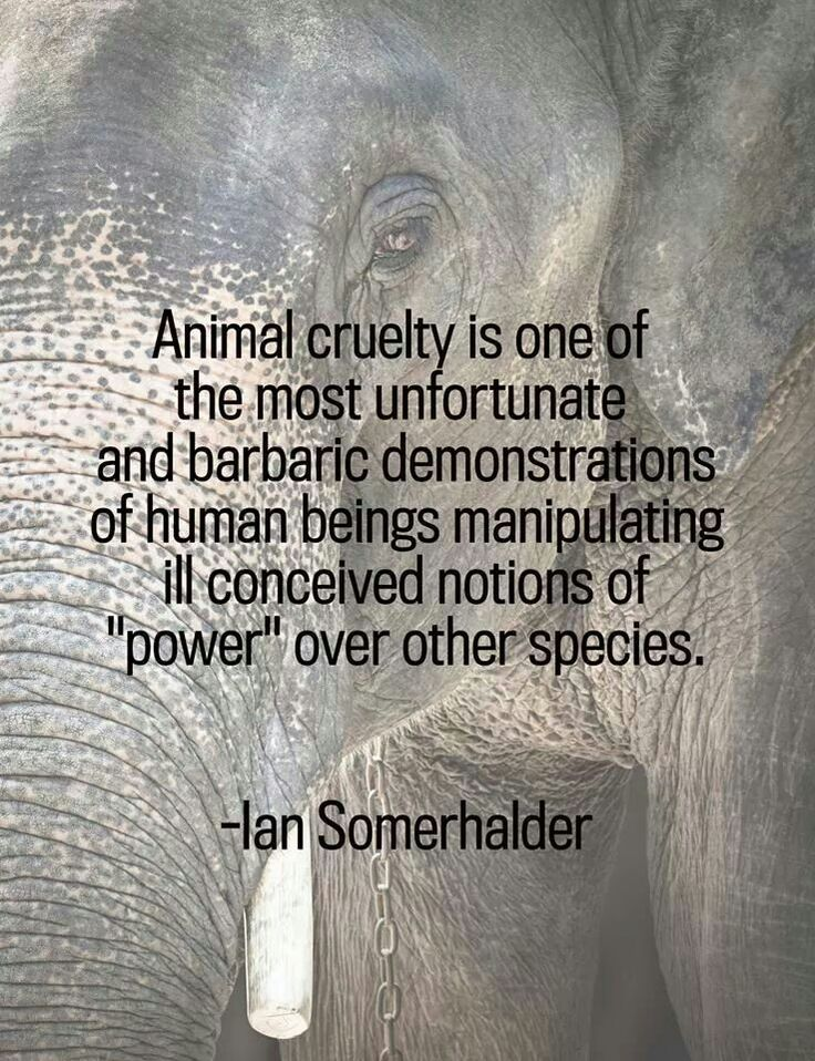 Quotes About Animal Gods 25 Quotes