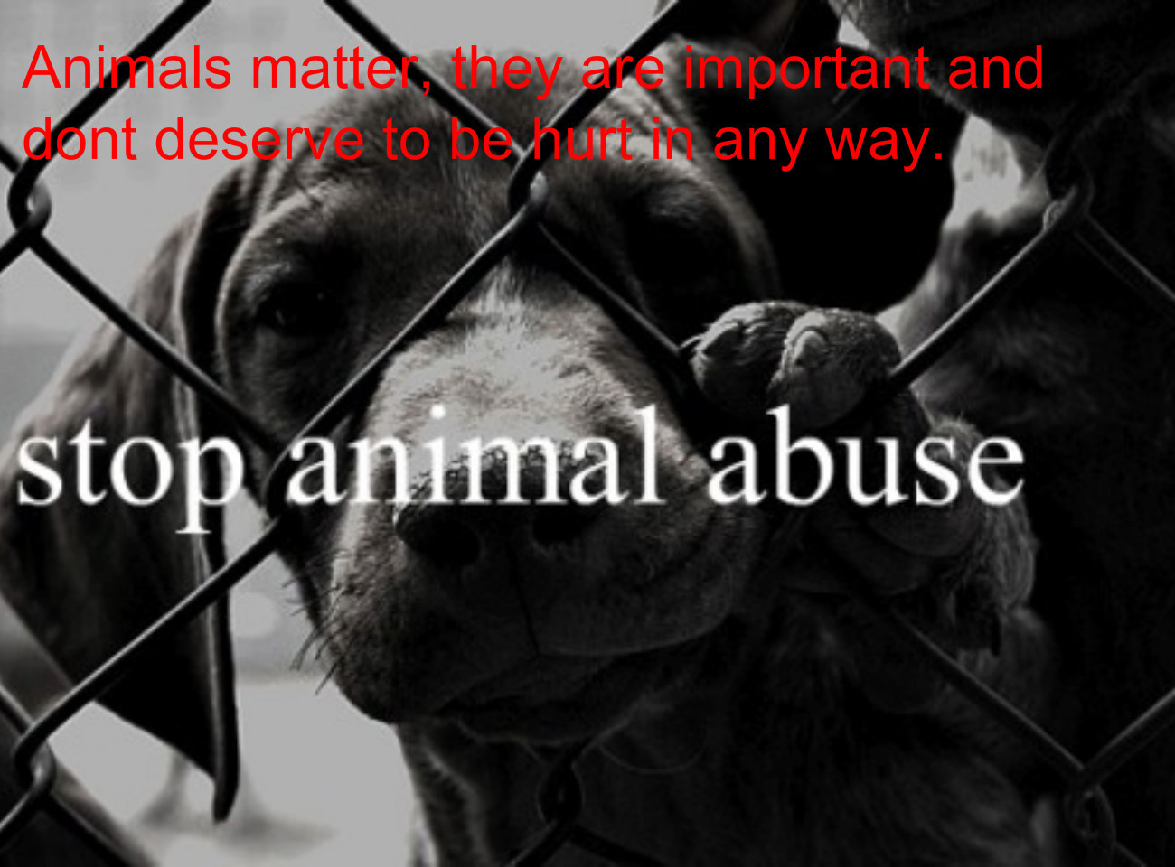 quotes about animal cruelty 93 quotes an als matt nt des r renportaratildefrac14and any way fimhieabuse
