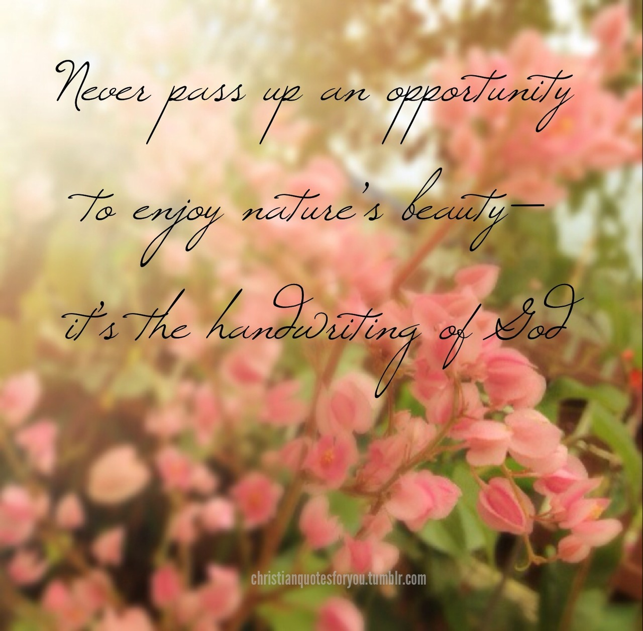 Quotes About Beauty In Nature 207 Quotes