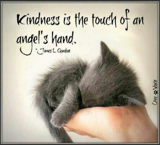 Quotes About Animal Kindness 29 Quotes