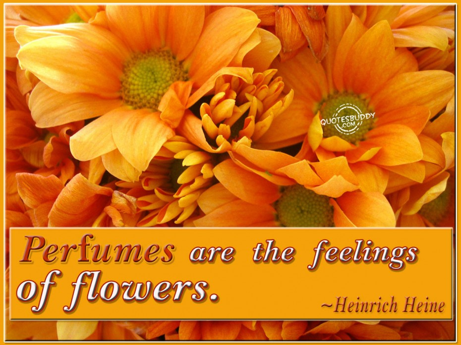 Quotes About Orange Roses 6 Quotes