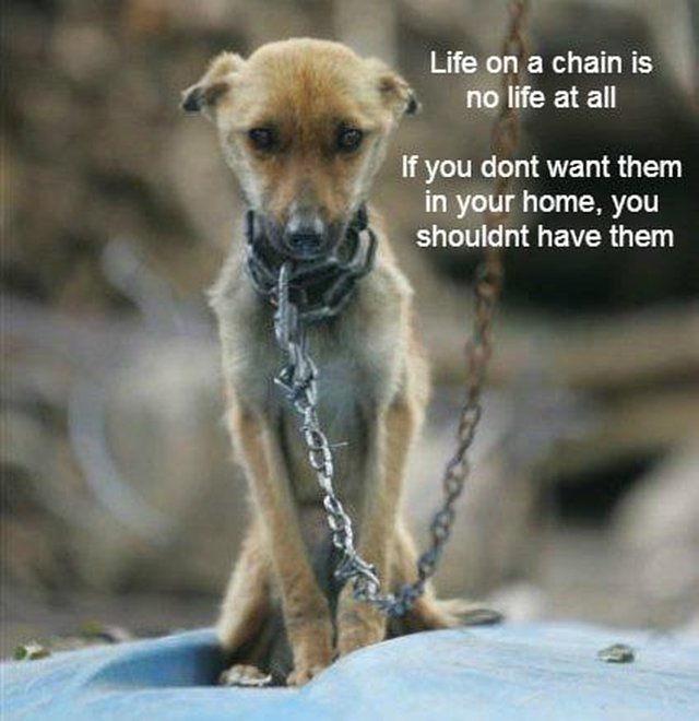 Quotes About Animal Cruelty 93 Quotes